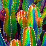 Neon Desert I