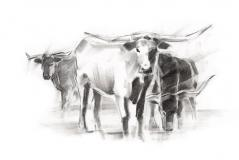 Contemporary Cattle II