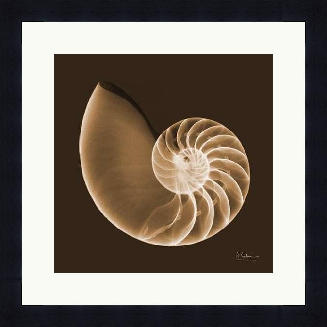 Sepia Nautilus